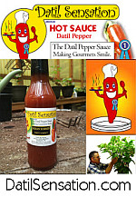 DatilSensation Datil Pepper Sauce
